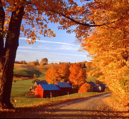Fall 5.jpg